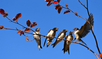Un estudio de la Universidad de Oviedo, clave para mitigar la pérdida de biodiversidad por el cambio climático