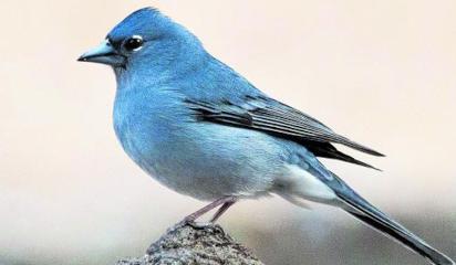 Científicos del Mieres descubren nuevas especies de aves en Canarias, Azores y Madeira